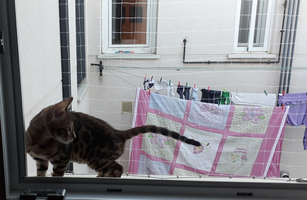 Red protección gato en terraza y ventanas